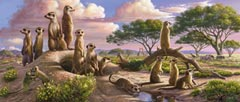 12649_adorable_meercats_panoramic__33933