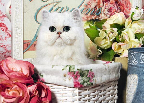 13002_cat_in_a_basket__40207