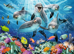 14710__Dolphins__97259