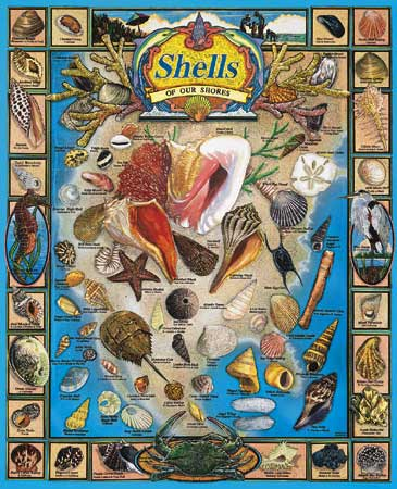 164_shells_of_our_shores__80761
