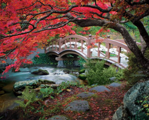 Japanese Bridge and Maple, Hatley Park