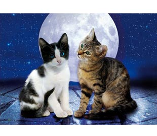 39086_cats_in_the_moonlight__13605