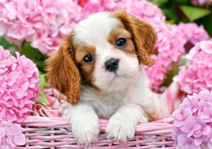 52233__Pup_in_Pink_Flowers__09812
