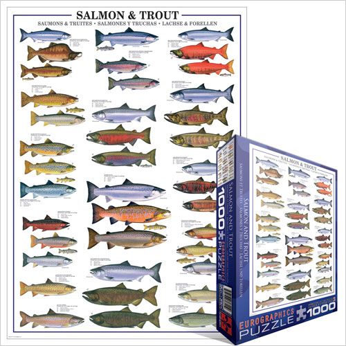 6000-0311_salmon_and_trout__15929
