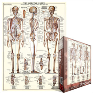 6000_3970_the_skeletal_system__93512