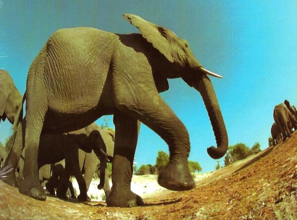 6894_travelling_elephants__41301