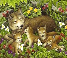 81171_wolf_cubs__18573