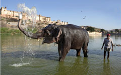 81846__Indian_Elephant_and_Handler__63327