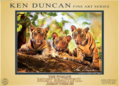 81901__Curious_Tiger_Cubs_India__86085