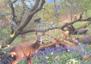 bluebell_wood__46430