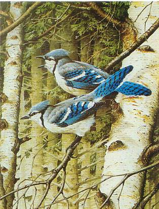 lbj1_blue_jays__18672