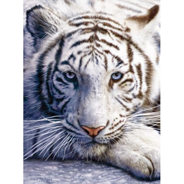 mpz6043__White_Tiger_Face__65087