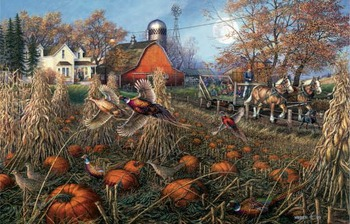 pheasant_pumpkin_patch__10259