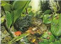 tf1_tropical_frogs__01141