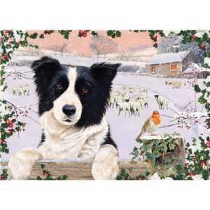 72910-border-collie