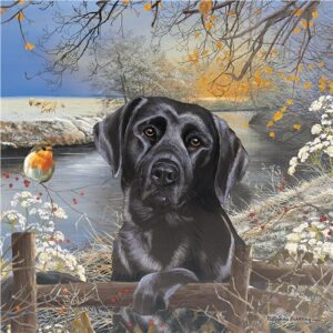 72911-black-labrador-frosty-morning